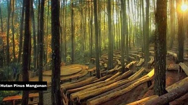 Beberapa Hutan Yang Bisa Kamu Jadikan Tempat Foto
