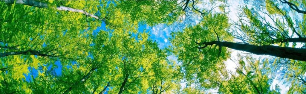 Pentingnya Melestarikan lingkungan dan alam